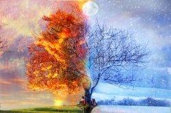 autumn-and-winter-tree.jpg