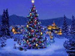 beautiful-Christmas-Trees.jpg