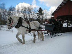sleigh_ride_winter-Stowe-Vermont-b06fb2272dbb4c4c85abcf1a9702cd23_t.jpg