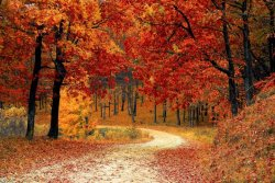 foliage 61.jpg