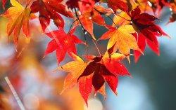 fall 20.jpg