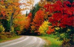 autumn 53.jpg