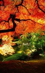 fall 21.jpg