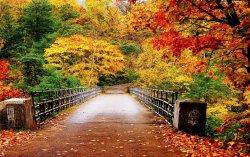 foliage - internet 5.jpg