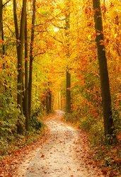 fall 11.jpg