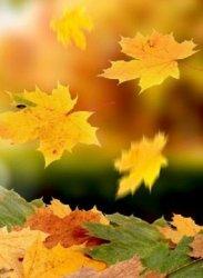 fall 19.jpg