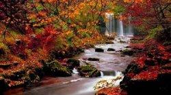 fall 14.jpg