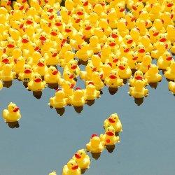 rub Duck-race.jpg