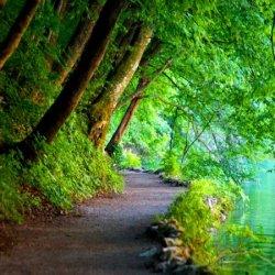 Free-Wallpaper-Nature-Scenes_Gg92QQ8-450x450.jpg