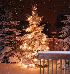 christmas-tree-outside.jpg