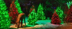 christmas_header_61855bd7-c165-4743-82bb-f13add1ffb99.jpg