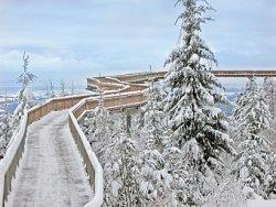 waldwipfelweg-sankt-englmar-weihnachtsmarkt-bayerischen-wald-verschneit.jpg