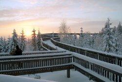 WaldWipfelWeg_im_Winter.jpg