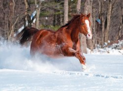 Snow-horse-brooke.jpg