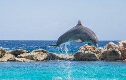 dolphin-906182_960_720.jpg
