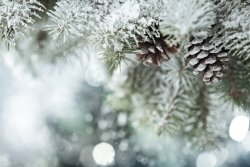 white-christmas-snow.jpg