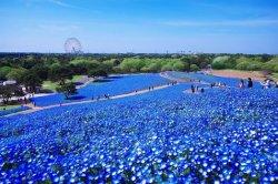 hitachi-seaside-park1.jpg