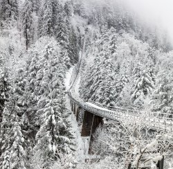 aerial-photography-of-train-rail-between-winter-trees.jpg