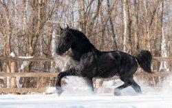 black-horse-in-the-snow-50236-2560x1600.jpg