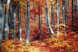 fall-3089995__480.jpg