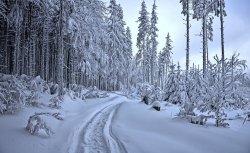 winter-4398514_960_720.jpg