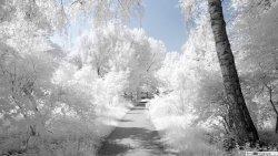 winter-path-landscape-wallpaper-2560x1440-10171_51.jpg