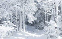 9588_White-snow-in-the-forest-Wonderful-winter-season.jpg