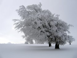 tree-in-winter-snow.jpg
