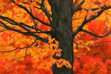 f - new-england-autumn-trees-new-england-fall-scenery1.jpg