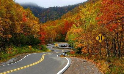 banner-small-best-fall-foliage_402x.jpg