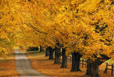 trees-in-autumn-natural-selection-tony-sweet.jpg