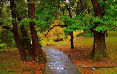 osen-dorozhka-park-dozhd-luzha-autumn-fall-rain-park-path.jpg