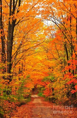 autumn-tunnel-of-trees-terri-gostola.jpg