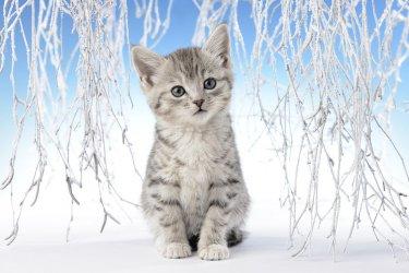 snow-kitten.jpg
