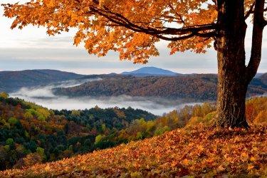 fall-leaf-126.jpg