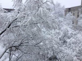 ice and trees.jpg