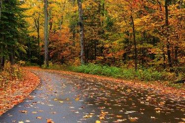 light-autumn-rain-rachel-cohen.jpg