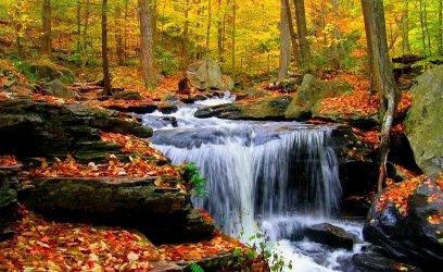 autumn-stream-1.jpg