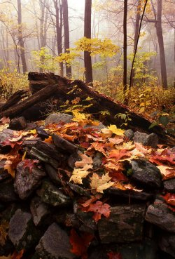 new-england-autumn-forest-scene-tony-ramos.jpg