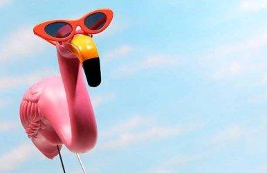 wsi-imageoptim-Summer-Flamingo.jpg