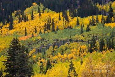 colorful-colorado-aspen-trees-thomas-anderson.jpg