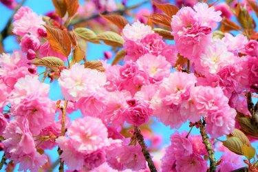 flower-4156983_960_720.jpg