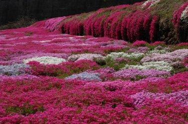 Spring-beautiful-nature-22727189-900-598.jpg