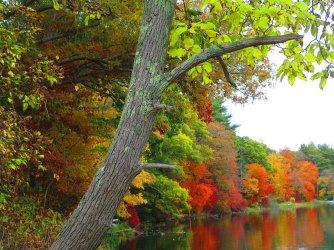 autumn-in-new-england-roberta-trabish.jpg