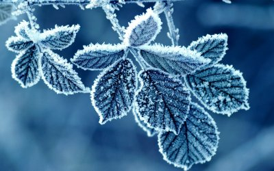 cold-winter-morning-frost-leaves-2.jpg