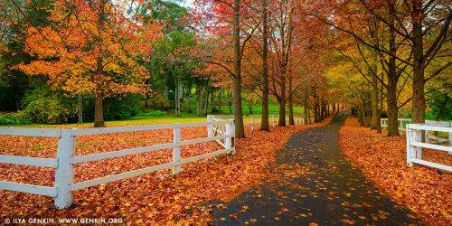 au-matcham-autumn-0001_l.jpg