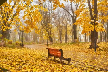A-bench-in-Autumn-season-with-colorful-foliage-and-trees.jpg