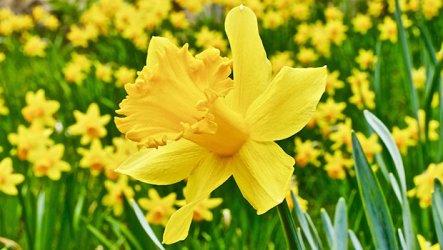 spring_new_ftr.jpg