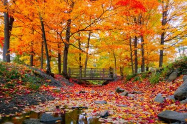 stock-photo-nature-outdoors-autumn-season-orange-leaves-natural-fall-earth-bac61a23-64f7-40a9-...jpg