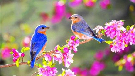 Spring-birds.jpg